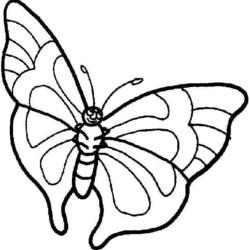 desenho-borboleta-imprimir-pintar-01