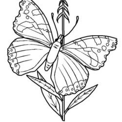 desenho-borboleta-imprimir-pintar-02