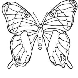 desenho-borboleta-imprimir-pintar-03