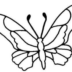 desenho-borboleta-imprimir-pintar-07