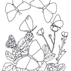 desenho-borboleta-imprimir-pintar-12