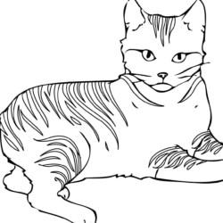 Desenhos de Gatos para Imprimir e Colorir