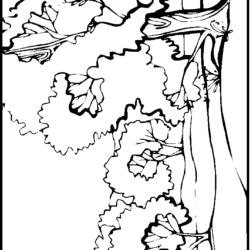 Desenhos De Paisagens Desenhos E Colorir