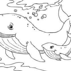 desenho-baleia-imprimir-colorir-05