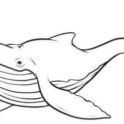 desenho-baleia-imprimir-colorir-17