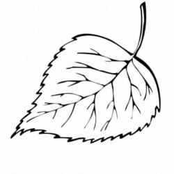 Desenhos De Folhas Para Imprimir E Colorir